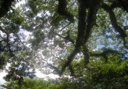 午後のラッテストーン公園
