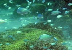 海の中の宝石たち (1)