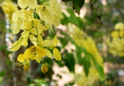 鮮やかに咲く南国の花